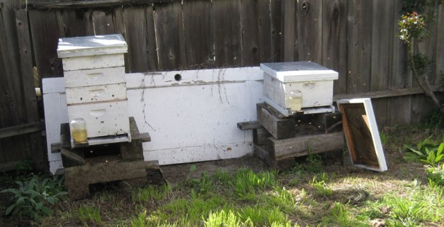New hive next to an established hive