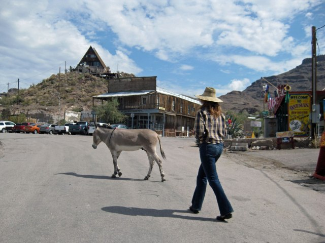 Amy stalks an Oatman burro