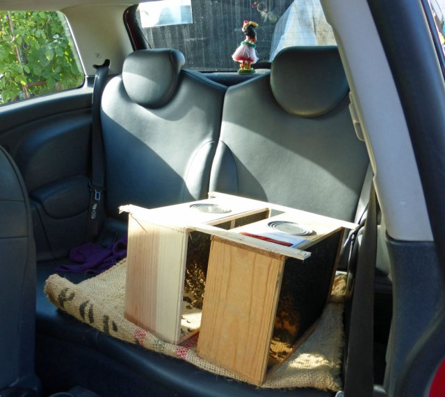 Bee packages in the backseat of the Mini Cooper