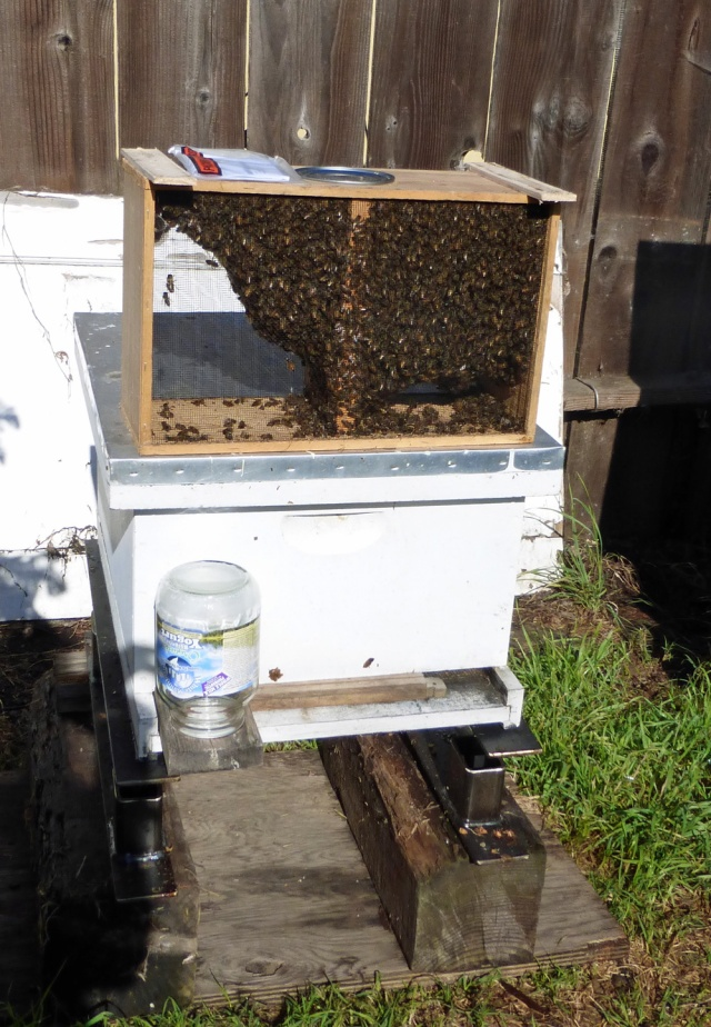 The package on top of the bees future home
