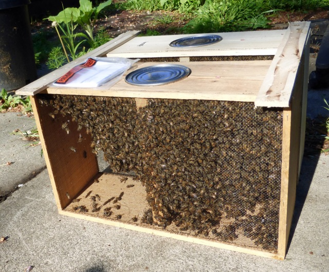 A package is one queen and four pound of bees in each nuc